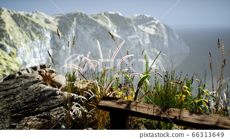 fresh grass at big rocky cliff in ocean 66313649