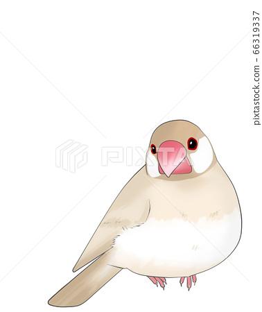 Sentencebird 66319337