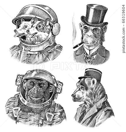 Monkey and Dogs astronaut, Bear in military style. Chimpanzee Spaceman dressed in Suit. Fashion 66319604