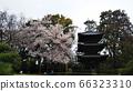 欽贊索的花園照片 66323310