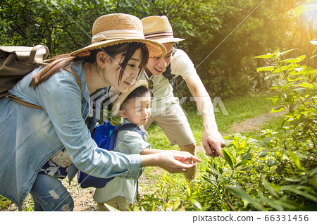 parent teaching son about nature and plant 66331456