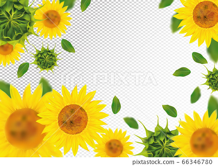 3D realistic sunflower with green leaf. Yellow sunflower in motion. Beautiful sunflower background. Falling sunflower. Vector illustration. 66346780