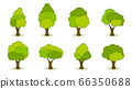 Collection of green summer trees. 66350688