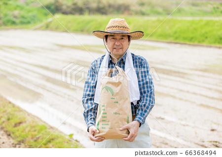 水稻種植和水稻收成圖像 66368494