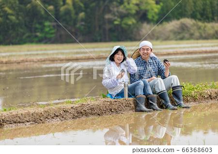 一對農民夫婦在稻田之間的路上吃午餐 66368603