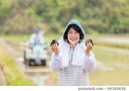 飯糰在稻田中的女人 66368636
