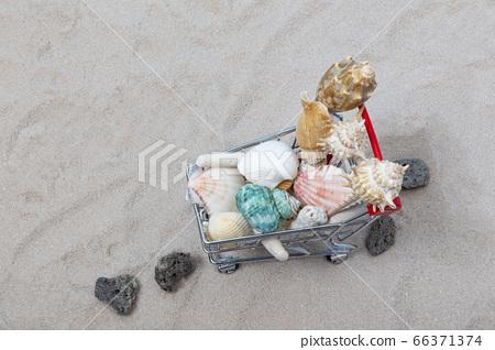 贝壳,贝壳和沙滩车 66371374