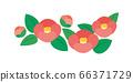 Camellia, camellia, camellia, flower illustration 66371729