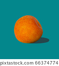 One apricot with hard shadow on pastel turquoise 66374774