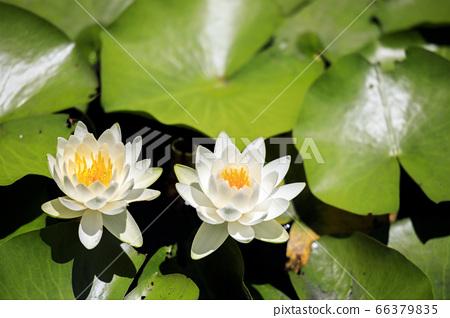 滝谷 꽃 창포 원 꽃 창포와 수국 66379835