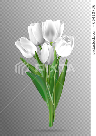 White tulips on a black background 66410736