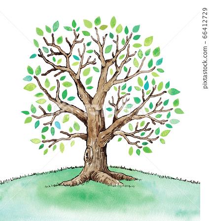 綠葉樹圖 66412729