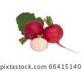 Fresh red radish isolated on white background 66415140