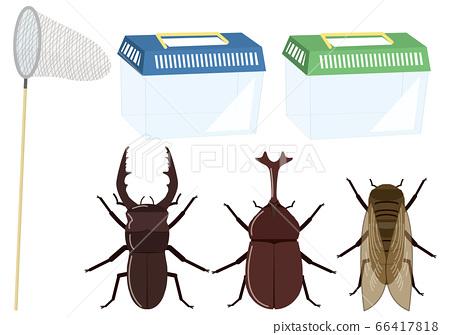 甲蟲 66417818