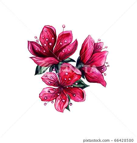 Pink flowers watercolor, Japanese plum blossom 66428580
