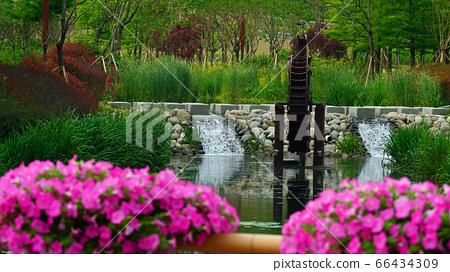 분홍색 페츄니아와 멀리 보이는 물레방아 66434309