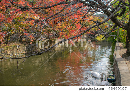 Water canal in Kurashiki historical town, Japan 66440197