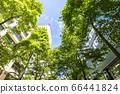 抬頭看著建築物的綠色辦公區的景觀 66441824