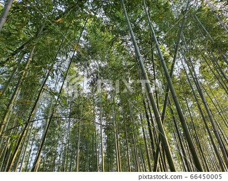 대나무숲 66450005