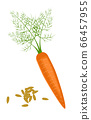 Carrot seeds and fresh juicy carrot isolated. Side view. Close up. vector illustration. For cosmetics, spa, health care, perfumery, cooking, aromatherapy 66457955