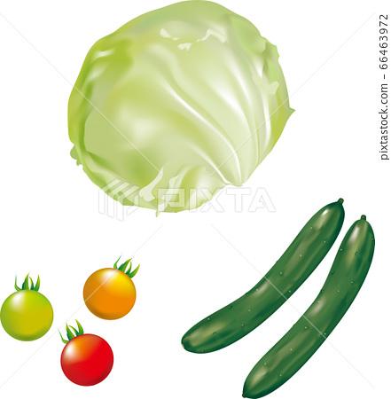 生菜,小番茄,黃瓜夏季蔬菜,真實插圖 66463972