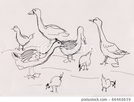 Poultry yard 66468639