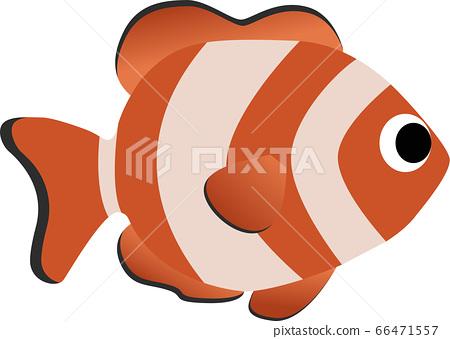 Clown anemonefish 66471557