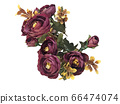 꽃 수채화 재료 66474074