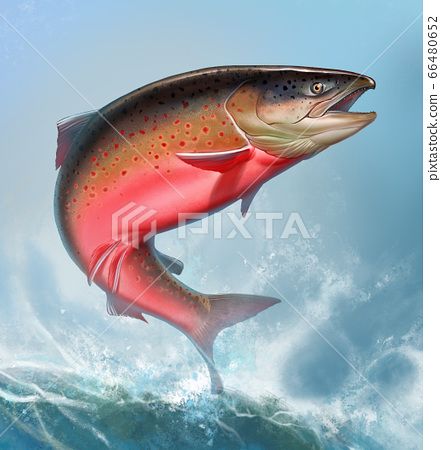 Atlantic salmon or pink salmon background on waves realismc illustration. Red salmon. Fishing on the river northern fish. Brown trout square format. 66480652