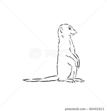 meerkat icon. animal sign, meerkat animal, vector sketch illustration 66482621