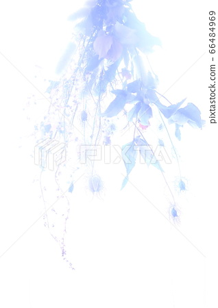 Dried flower silhouette 66484969