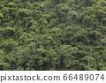울창한 열대 숲의 이미지 배경 66489074