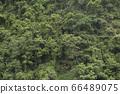 울창한 열대 숲의 이미지 배경 66489075