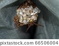 Ashigari bashi和巢 66506004