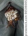 Ashigari bashi和巢 66506005