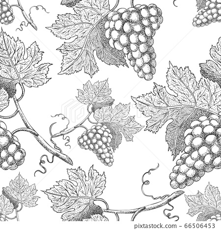 Seamless vector pattern with grapes. Black and white engraving style drawing - Vector 66506453