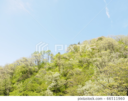 清新的綠色和藍天[新潟縣通內市] 66511960