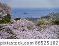 벚꽃과 호위함 【카나가와 현립 塚山 공원] 배 초점 66525182