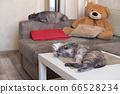 Two cats at home lying, sleeping against a sofa 66528234