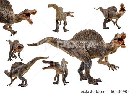 Spinosaurus  ,dinosaur on white background 66530902