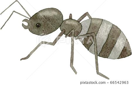 개미 66542963