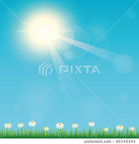 summer time sunny sky background with flower meadow 66548564