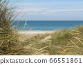 View over the sea from dunes covered in lyme grass 66551861