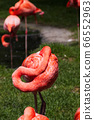 Flamingo in sleeping position 66552963