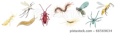 해충 9 종 수채화 일러스트 66569634
