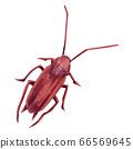 蟑螂的水彩手繪插圖 66569645