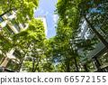 抬頭看著建築物的綠色辦公區的景觀 66572155