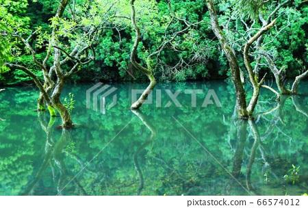 이토 부동 연못의 신록 66574012