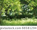 Green landscape 66581294