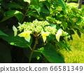 녹색 식물 66581349